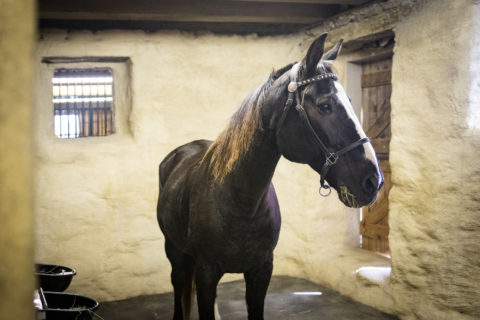 horse retirement facility in pa