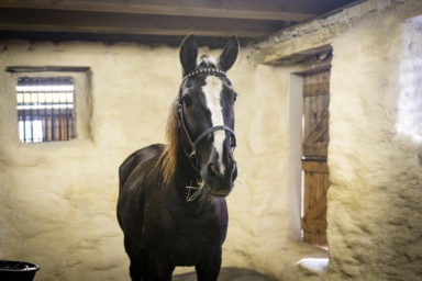 horse retirement boarding facility in pa