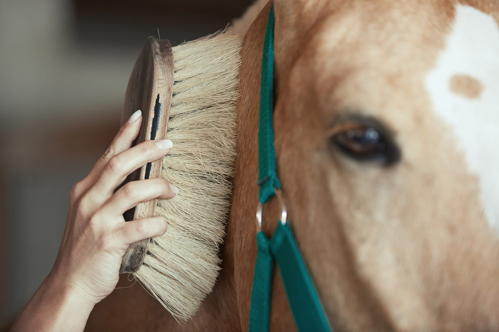 winter-horse-care-grooming-horse-riverside-farm