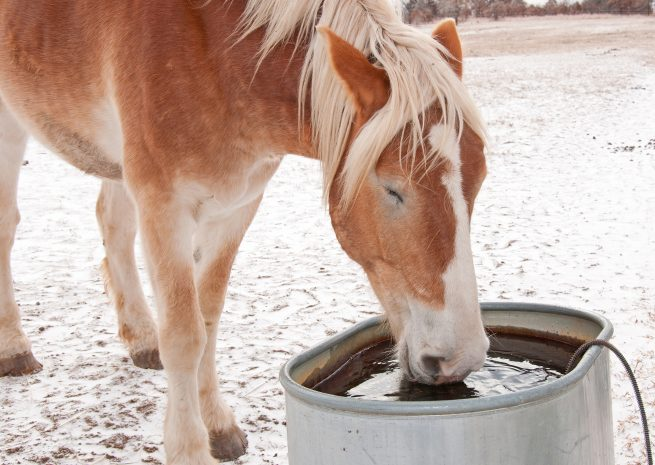 winter-horse-care-horse-drinking-water-riverside-horse-farm