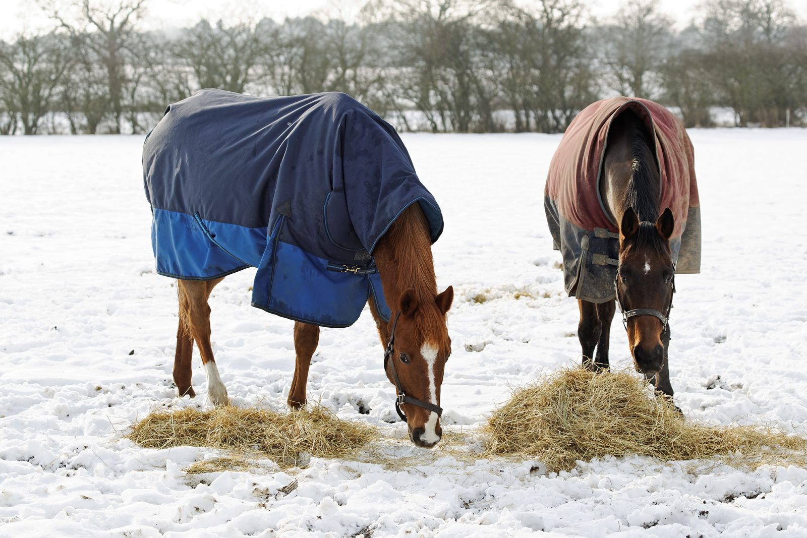 winter-horse-care-riverside-farm-horses-eating-hay