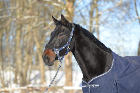Retiring a horse