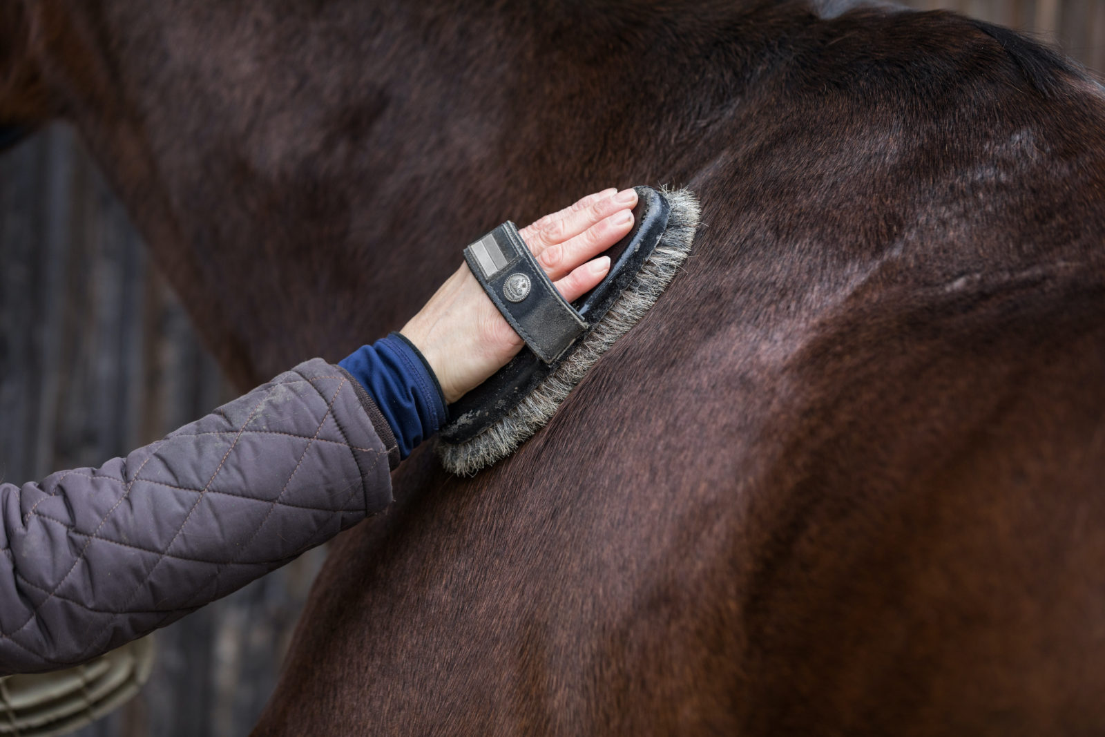 Grooming for a retired horse in PA