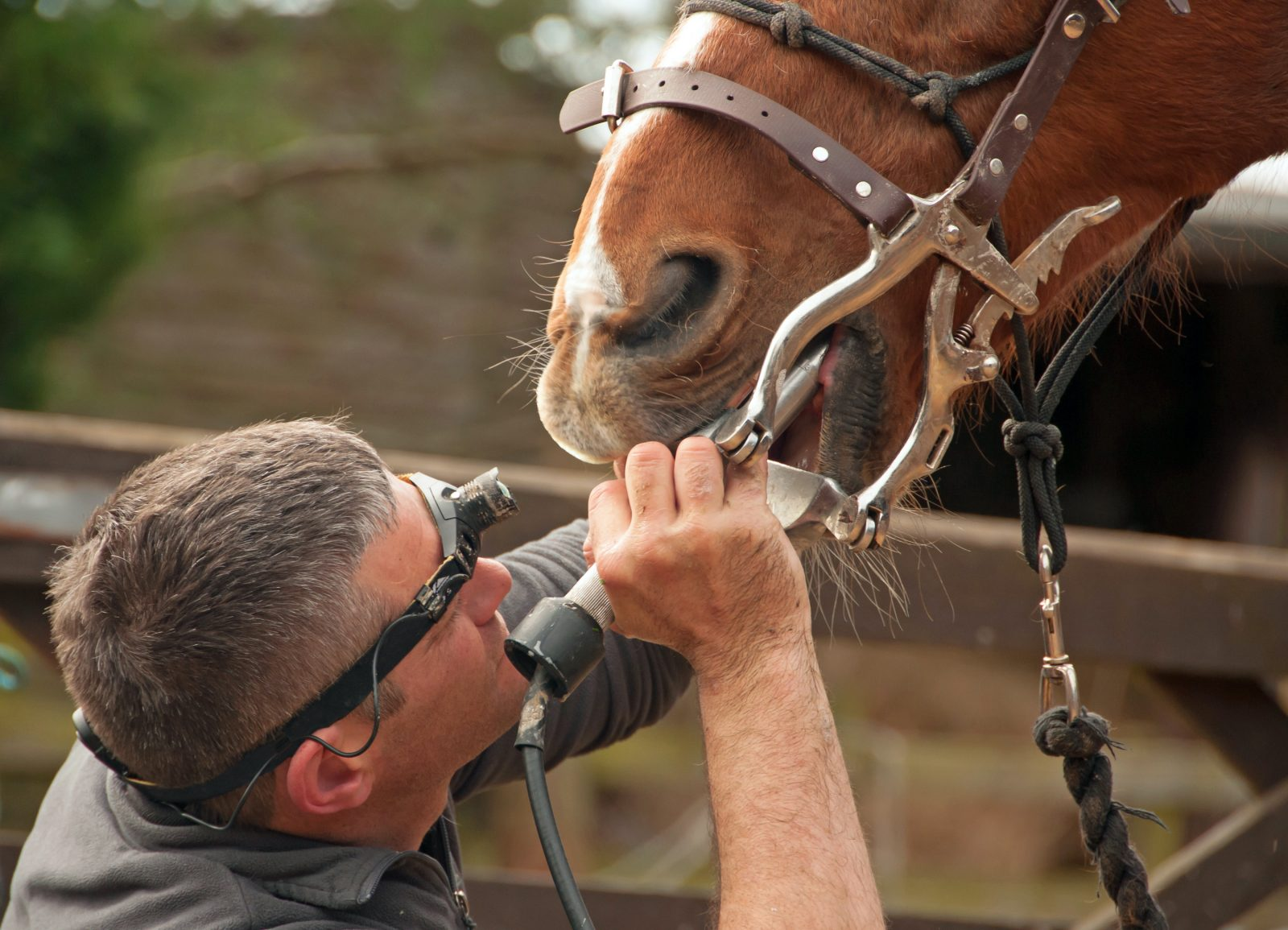 Horse Dentist on Retirement Horse Farm