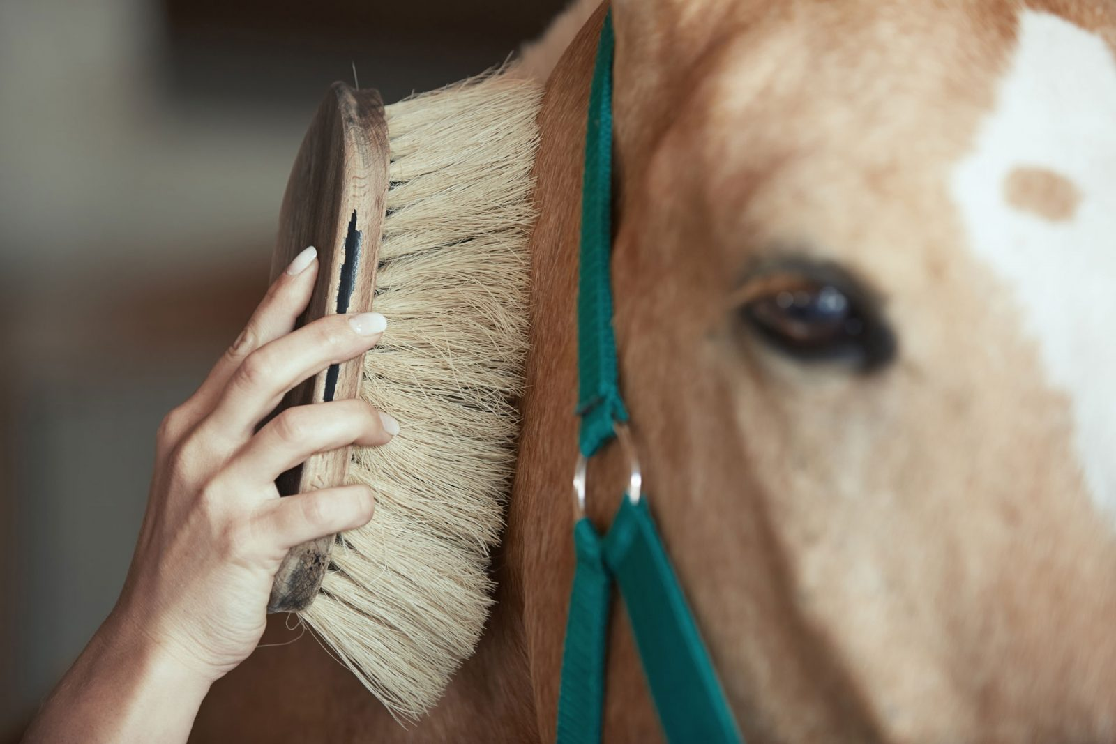 caring for retired horse